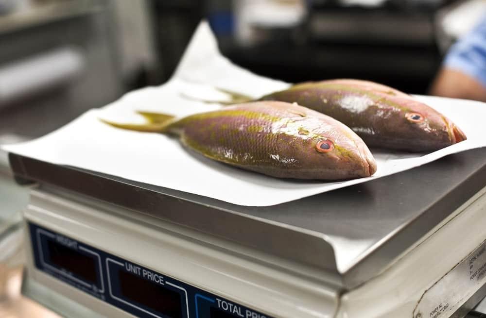 Pesée poissons balance