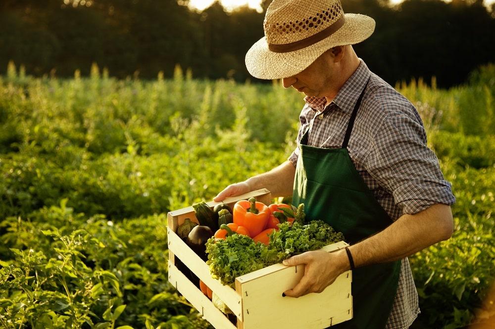 Producteur fruits et légumes magasin producteur
