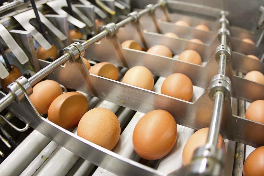 Triage des œufs, agroalimentaire